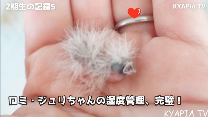 巣引き 繁殖